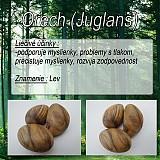 Orech (Juglans)