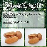 Nezaradené - Orgován (Siringa) - 1894532