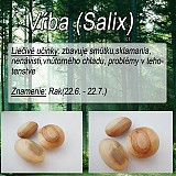 Nezaradené - Vrba (Salix) - 1894533
