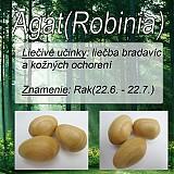 Nezaradené - Agát (Robinia) - 1894575
