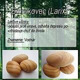 Drobnosti - Smrekovec (Larix) - 1894648