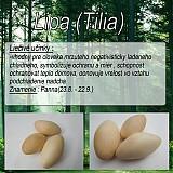 Drobnosti - Lipa(Tilia) - 1894666