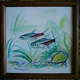 Kresby - Paracheirodon innesi - 1954279