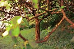 Fotografie - čaro stromu - 205485