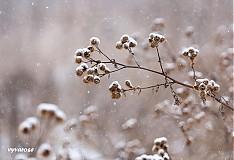 Fotografie - uprostred zimy... - 2086992