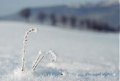 Fotografie - omrzliny - 2096895
