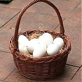 Suroviny - Husí vajíčka ke zdobení - 2120051