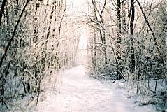 Fotografie - Magic forest - 2156595