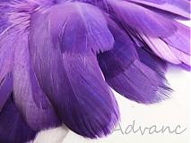 Suroviny - Kačacie fialové R8 - 2163165