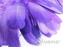 Suroviny - Kačacie fialové R8 - 2163168