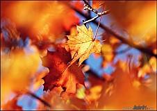 Obrazy - Autumn Harmony I - 224148