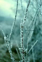 Fotografie - námraza III. - 2243488