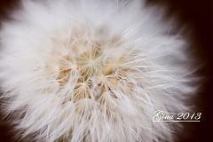 Fotografie - pfúúúúúúúúúúúú - 2252229
