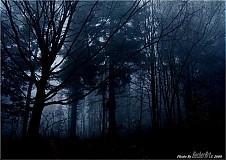 Obrazy - Bluecracy - 226729