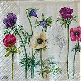Papier - Windflowers cream - 2400854