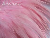 Suroviny - Kohútie jednofarebné svetlá rúžová R14 - 2431496