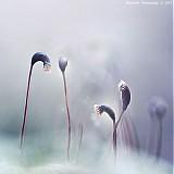 Obrazy - Lights Of Hope XIV (In Loving Memory Of My Mum ♥ R.I.P.) - 2506741