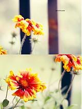 Fotografie - V jedno ráno - 2541377
