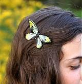 - Ornithoptera Victoriae Epiphanes - 2544494