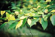 Fotografie - jesenné listy - 2547134