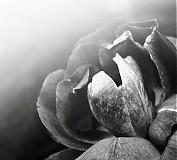 Fotografie - čiernobiela kráska - 2773118
