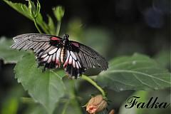 Fotografie - Na krídlach motýla II. - 2858267