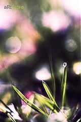 Fotografie - Ako maľovaný - 297303