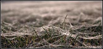Fotografie - Pavučinkové kráľovstvo - 3040875