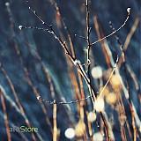Fotografie - Winter poem - 304210