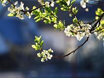 Fotografie - Keď kvitne jar - 3062829