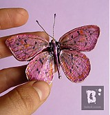 - Lycaena helloides - 3137413