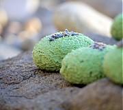 Drogéria - Dvojitá levanduľa - žihľavový šampúch 30g - 3146225