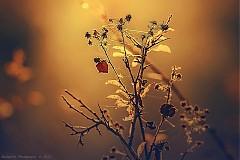 Obrazy -  - 3181336