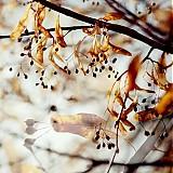 Fotografie - Fly II. - 3216694