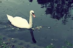 Fotografie - biela kráľovná - 3252333