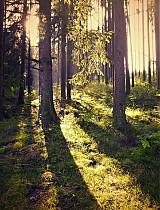les se probouzí