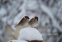 Fotografie - Vo dvojici - 3561489