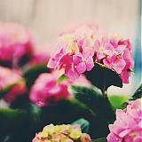 Fotografie - Cez ružové okuliare... - 3701761