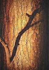 pohladit kůru a obejmout strom :)