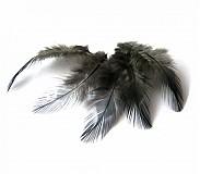 Suroviny - Čierne pierka s lemovaním- (ČF13) - 2 ks - 3710813