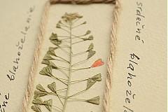 Papiernictvo - srdečné blahoželanie 01 - 3716533
