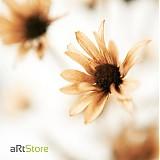 Fotografie - Autumnist - 397308