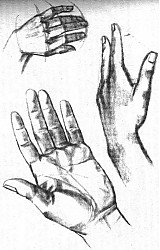 Kurzy - kresba - základy kresby, zátišie - 415373
