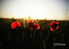Fotografie - V západe slnka - 422074