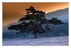Fotografie - Blatnický bonsaj - 436184