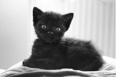 Čierna dáma mačička veľký péro vyhodiť práce porno
