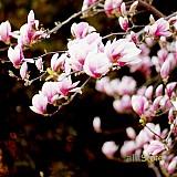 Fotografie - Ružové pohladenie - 472798