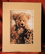 Fotografie - old bears stories - 55327