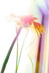 Fotografie - Colourfull - 590528