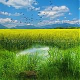 Obrazy - VYMYSLENÁ KRAJINA fotoplátno 60x60 cm - 632538